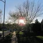 The Sun & a tree